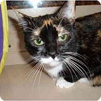 Adopt A Pet :: Dazzle - No.Charleston, SC
