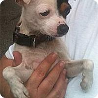 Adopt A Pet :: Spanky - Villa Rica, GA