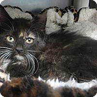 Adopt A Pet :: Emily - Brockton, MA