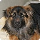 Adopt A Pet :: 18717 - Jasper