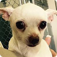 Adopt A Pet :: Kalani - geneva, FL