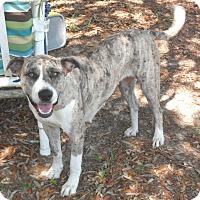 Adopt A Pet :: Venus - Pensacola, FL