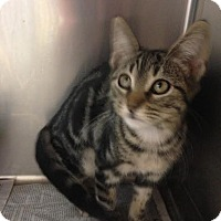 Adopt A Pet :: Cid - East Brunswick, NJ