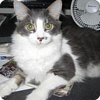 Adopt A Pet :: McCoy - Agoura Hills, CA