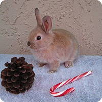Adopt A Pet :: Nutmeg - Bonita, CA