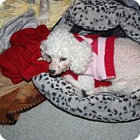 Adopt A Pet :: Teva - Homer, NY
