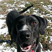Adopt A Pet :: Jax - Franklin, TN