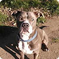 Adopt A Pet :: Ozzy - Lodi, CA