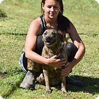 Adopt A Pet :: Selma - Groton, MA