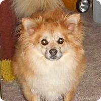 Adopt A Pet :: Kodiak - Coal City, WV