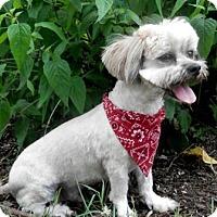 Adopt A Pet :: Mack - Tyler, TX