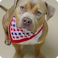 Adopt A Pet :: Jack - Dublin, CA