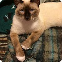 Adopt A Pet :: Oscar - DFW Metroplex, TX