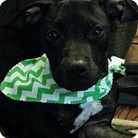 Adopt A Pet :: Mady - Albemarle, NC