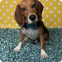 Adopt A Pet :: Evan - Kenner, LA