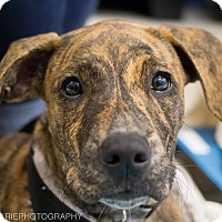 Adopt A Pet :: Matilda - Grand Rapids, MI