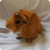 Adopt A Pet :: Peaches - Monrovia, MD