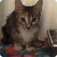 Adopt A Pet :: Jeckyll 8438 - Columbus, GA