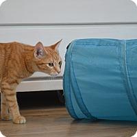 Adopt A Pet :: Cora - St. Charles, MO