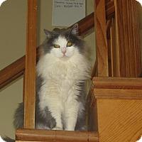 Adopt A Pet :: Van - Ridgway, CO