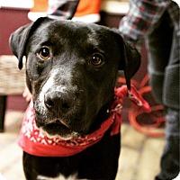 Adopt A Pet :: Bentley - Los Angeles, CA