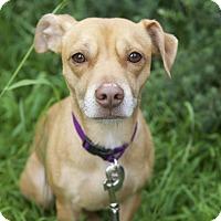 Adopt A Pet :: Lolo - Los Angeles, CA