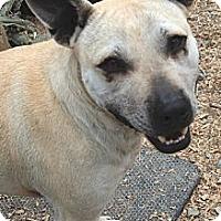 Cattle Dog Mix Dog for adoption in Midlothian, Virginia - Sundance