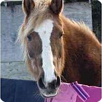Adopt A Pet :: Kaylee - Washington, CT