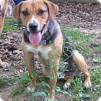 Adopt A Pet :: Chrome - Somers, CT