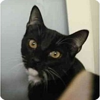 Adopt A Pet :: Hades - Maywood, NJ