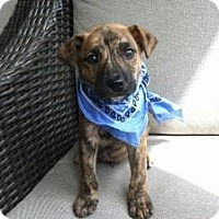 Adopt A Pet :: Baby Chance - Marlton, NJ