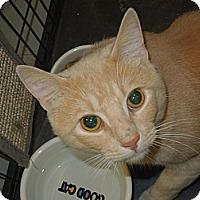Adopt A Pet :: Harley - Medina, OH