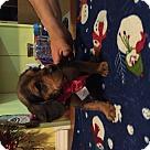 Adopt A Pet :: Anna