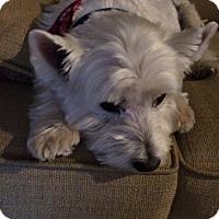 Adopt A Pet :: Sammie - Frisco, TX