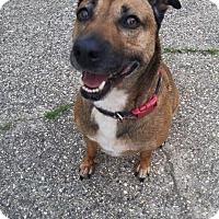 Adopt A Pet :: Autumn - Cuddebackville, NY