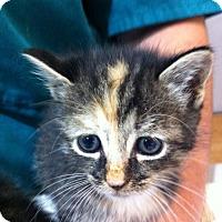 Adopt A Pet :: Delilah - Watkinsville, GA