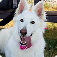 Adopt A Pet :: Macy - Patterson, CA