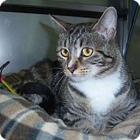 Adopt A Pet :: Tabatha - Washingtonville, NY