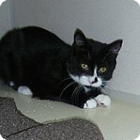 Adopt A Pet :: Victor - Hamburg, NY