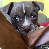 Adopt A Pet :: Donny - Newtown, CT