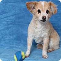 Adopt A Pet :: Buttons - Lomita, CA