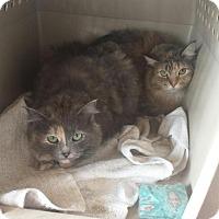 Adopt A Pet :: Lolli & Pippi - Quentin, PA