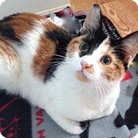 Adopt A Pet :: Cleo - Long Beach, NY