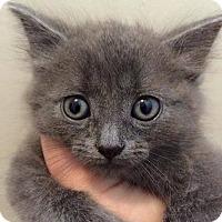 Adopt A Pet :: Reggie - Toms River, NJ