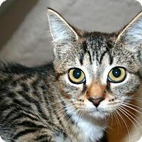 Adopt A Pet :: Doreen - Lancaster, PA