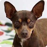 Adopt A Pet :: Benji - Picayune, MS
