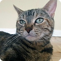 Adopt A Pet :: Ciara - Mississauga, Ontario, ON