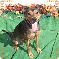 Adopt A Pet :: CAMDEN - Marietta, GA