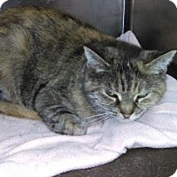 Adopt A Pet :: Shannon - Parma, OH