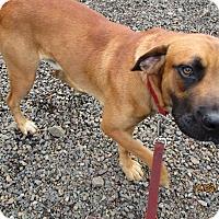 Adopt A Pet :: Hunter - Tillamook, OR